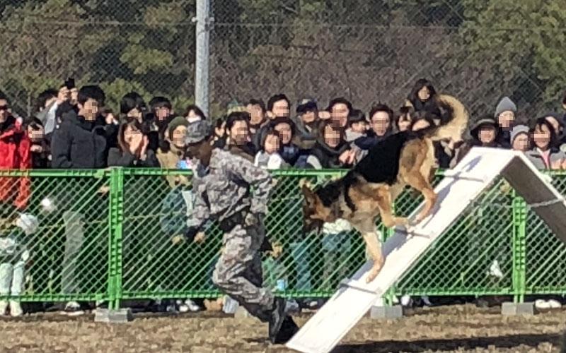 家族連れで賑わっていた警備犬の訓練展示