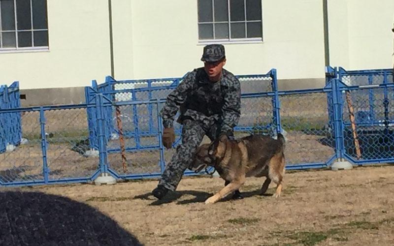 警備犬による訓練展示の様子